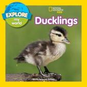 Explore My World: Ducklings - фото обкладинки книги