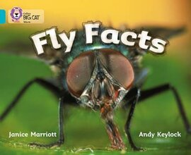 Fly Facts. Workbook - фото книги