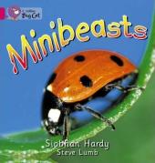 Minibeasts - фото обкладинки книги