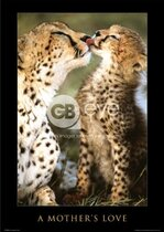 "Книга Плакат ""A Mothers Love (PH0142)"""
