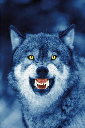 "Плакат ""The wolf (PH0278)"""