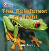 The Rainforest at Night